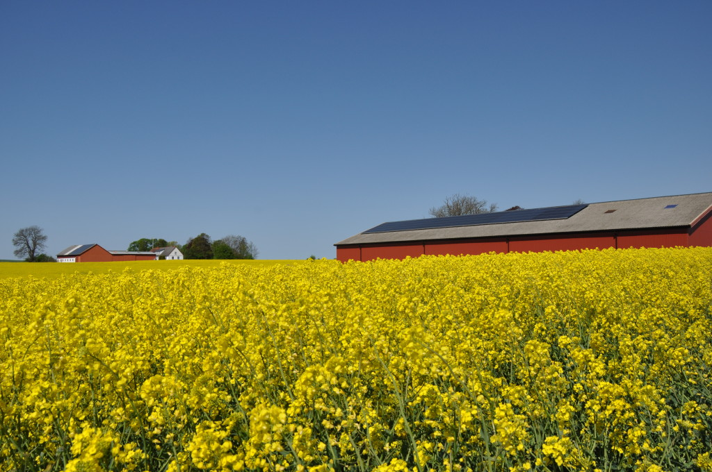 Futura Energi monterade solelpaneler i Trelleborg